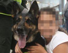Su adiestradora dice que Sombra es amigable con los niños pero implacable cuando está buscando drogas. (Policía de Colombia)