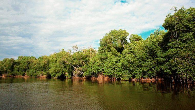 Una de las áreas del Manchón Guamuchal que tendrá mayor protección. (Foto Prensa Libre: Conap)