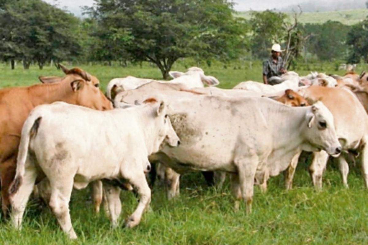 Presentan resultados del censo agropecuario en Costa Rica