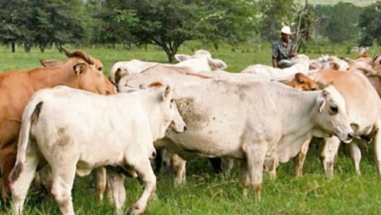 La ganadería es la principal actividad agropecuaria en Costa Rica.