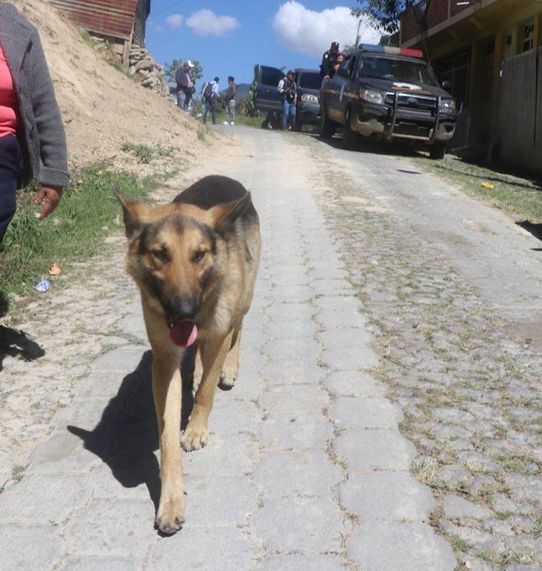 Perros callejeros son maltratados por una vecina en Los Jazmines, San Pedro Sacatepéquez, San Marcos. (Foto Prensa Libre: Whitmer Barrera)