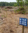 Área donde permanecía una plantación de palma africana, en Manchón Guamuchal. (Foto Prensa Libre: Conap)