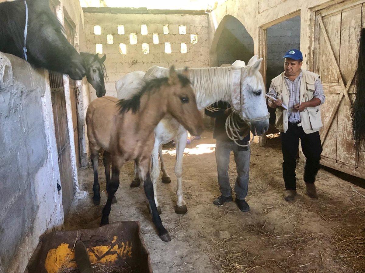 """En el establo están los caballos de Julio César Serrano Samayoa, apodado """"El Finquero"""" o """"El Monje"""". (Foto Prensa Libre: MP)"""