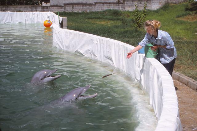 En el 2001, dos delfines fueron rescatados en Santa Lucía Milpas Altas, Sacatepéquez, por organizaciones protectoras de los derechos de los animales. (Foto Prensa Libre: Dolphin Proyect)