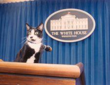 """El 20 de febrero se celebra el Día del Gato, para recordar a """"Socks"""", el felino que vivió en la Casa Blanca, y para concienciar sobre los cuidados de esta mascota."""