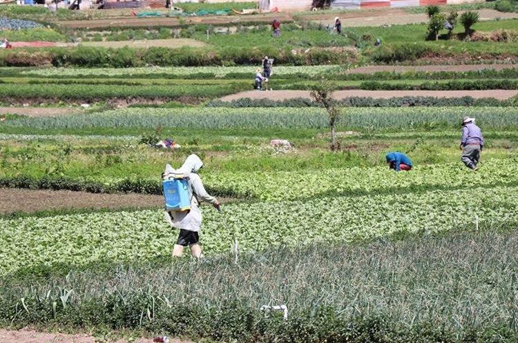 Agroexportadores piden a candidatos presidenciales impulsar acciones prioritarias para el sector