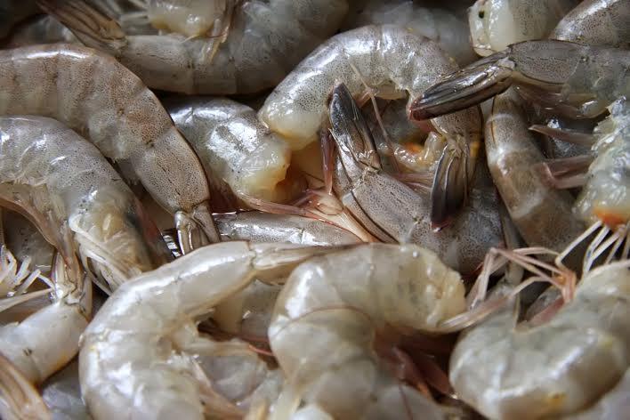 Exportadores señalan a MAGA por afectar ventas de pesca y acuicultura