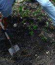 Los cuerpos fueron hallados en dos fosas en el poblado de Carrizalillo, en el estado de Guerrero.(Foto Prensa Libre: EFE).