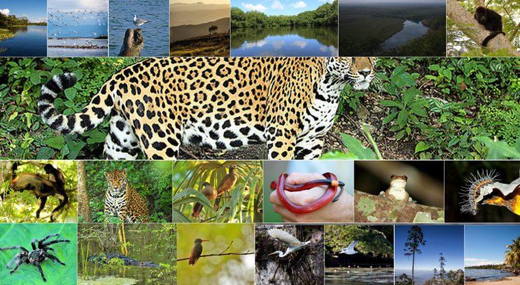 Flora Y Fauna De Guatemala Prensa Libre