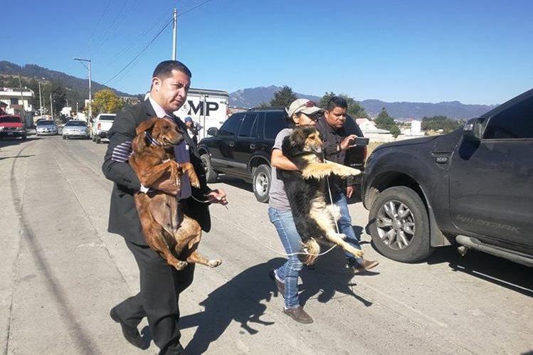 Autoridades rescatan a dos de los perros localizados en el inmueble en La Esperanza, Quetzaltenango. (Foto Prensa Libre: Hemeroteca)