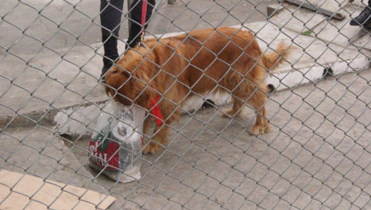 Perros antinarcóticos olfatean las encomiendas en tres complejos carcelarios en busca de drogas. (Foto Prensa Libre: DGSP)