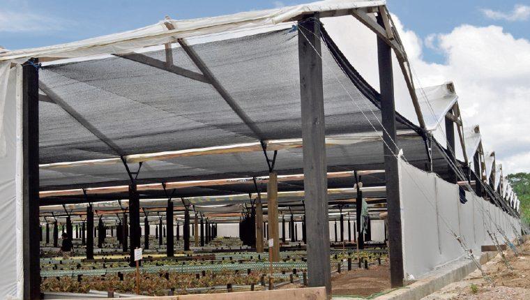 uso extensivo de invernaderos han permitido mejorar la productividad de los vegetales.