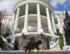 El perro del presidente estadounidense, Barack Obama, Bo, pasea por la Casa Blanca que luce adornada con motivos de Halloween. (Foto Prensa Libre: EFE).