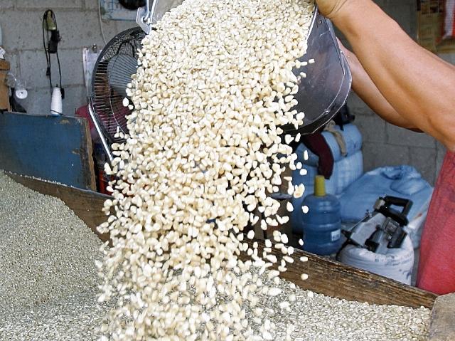 El maíz es el cultivo más afectado por la sequía