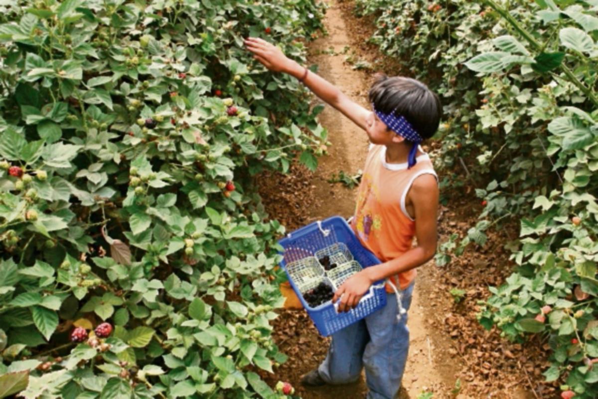 productores agrícolas se reunirán en aldea quichelense.