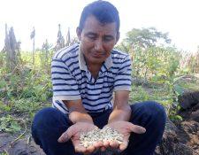 Miguel Ángel Velásquez muestra los daños en su cultivo. (Foto Prensa Libre: Rolando Miranda).