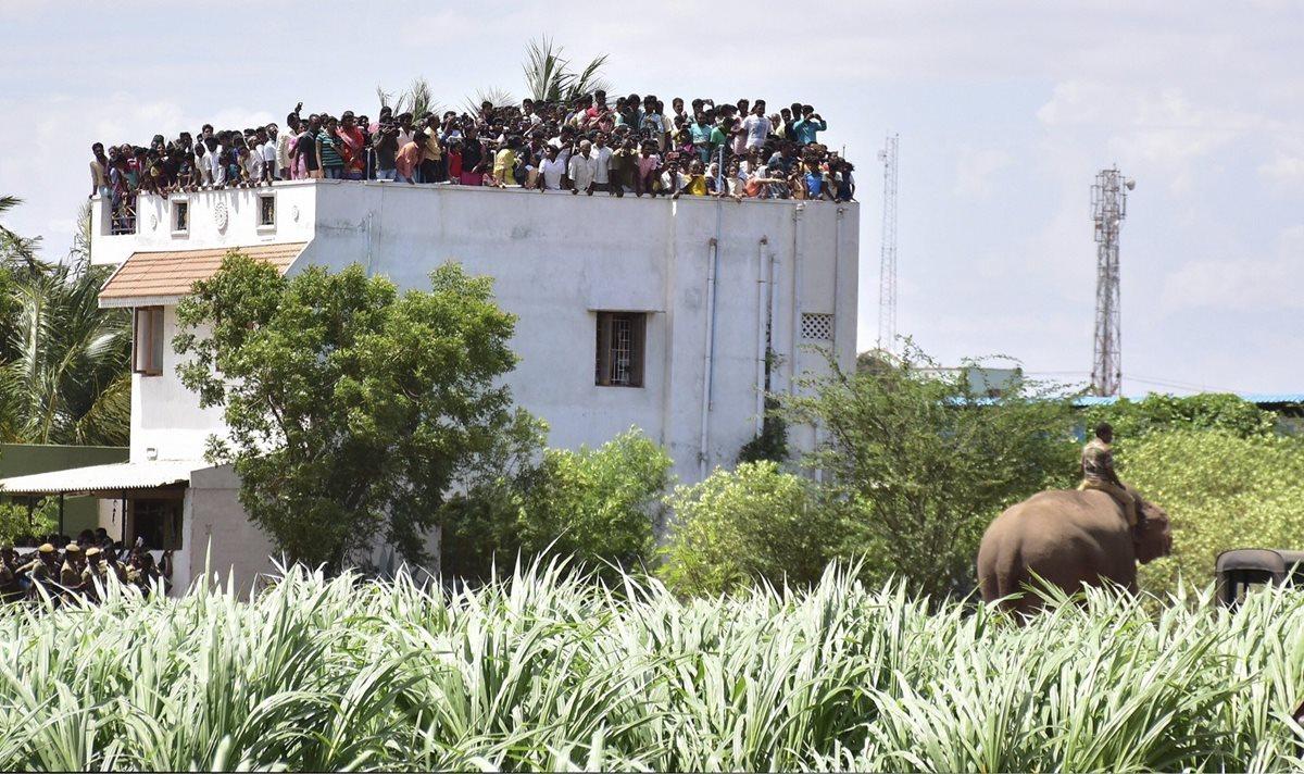 Elefante mata a cuatro y siembra el pánico en India