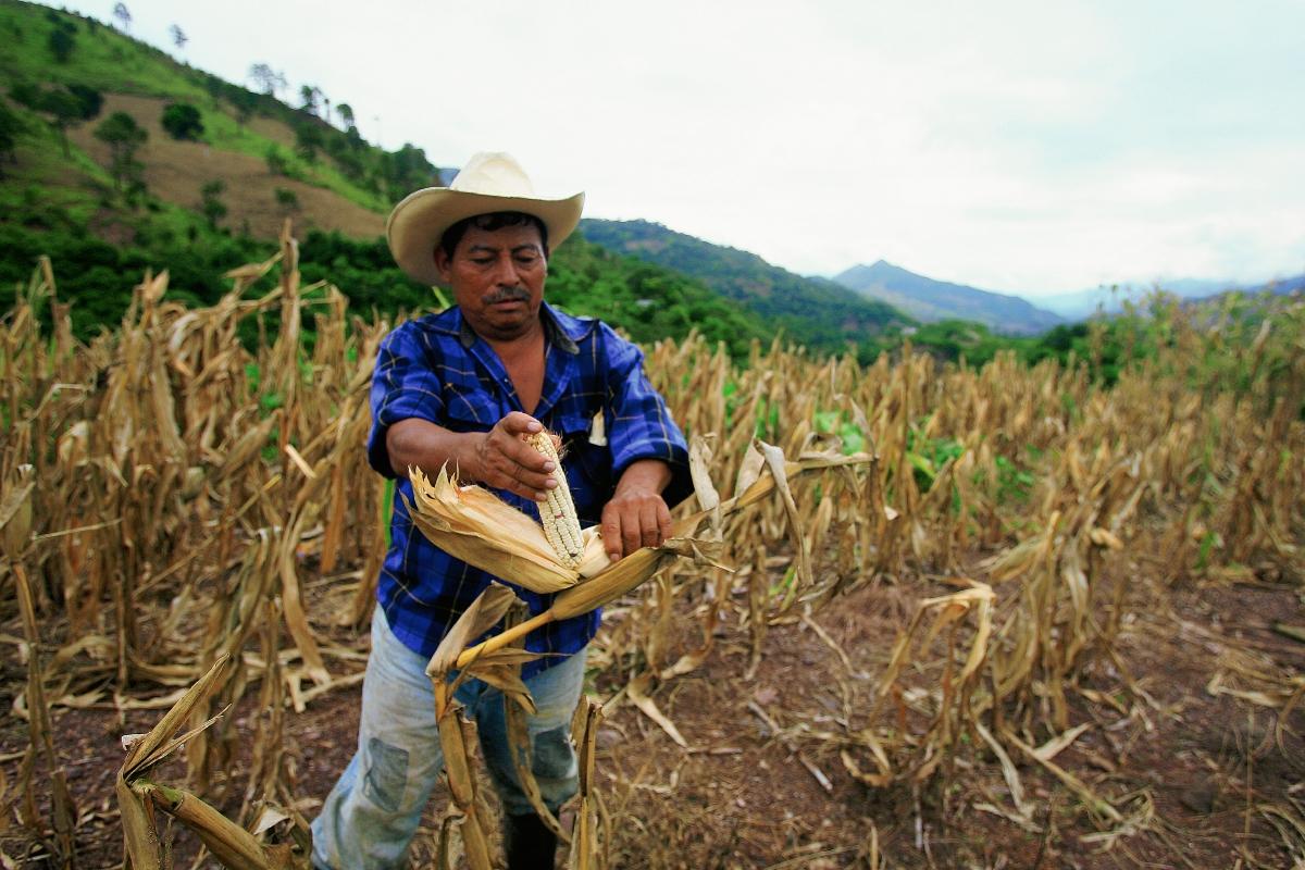 Cambio climático: Guatemala tiene poca investigación con financiamiento gubernamental para enfrentar sus efectos