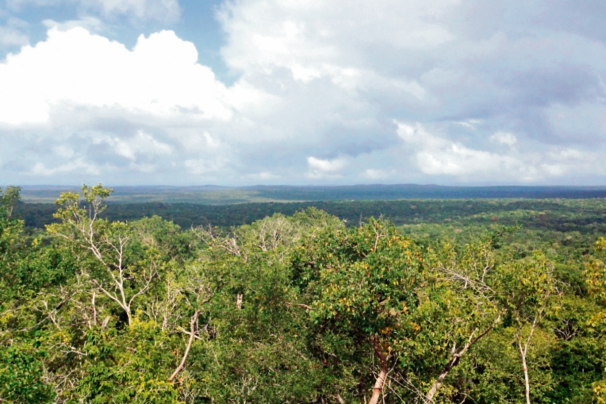 Vista de la selva que rodea al sitio El Mirador desde la pirámide de La Danta. (Foto Prensa Libre: Rigoberto Escobar)