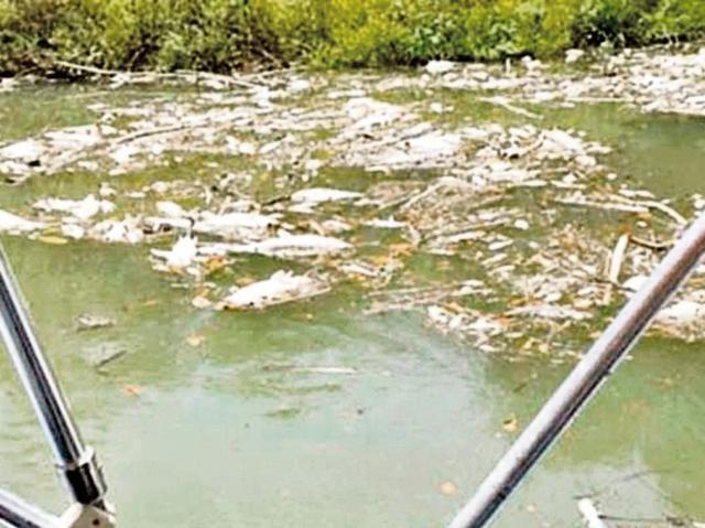 Proceso por contaminación del río La Pasión sigue en marcha