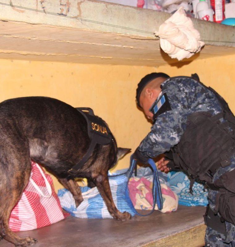 Autoridades con la ayuda de perros entrenados buscan ilícitos en la prisión. (Foto Prensa Libre: Cortesía).