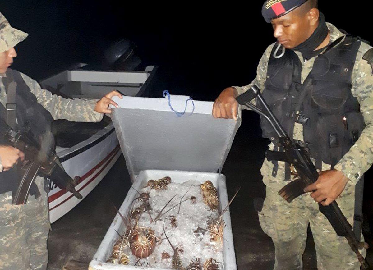 Parte de las langostas decomisadas a los tres capturados en Lívingston. (Foto Prensa Libre: Cortesía).