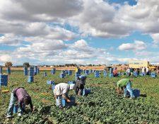 El año pasado se generaron 170 mil empleos para los migrantes centroamericanos en los Estados Unidos, que contribuyó a un mejor ingreso de divisas para la región, según la Cepal. (Foto Prensa Libre: Hemeroteca)