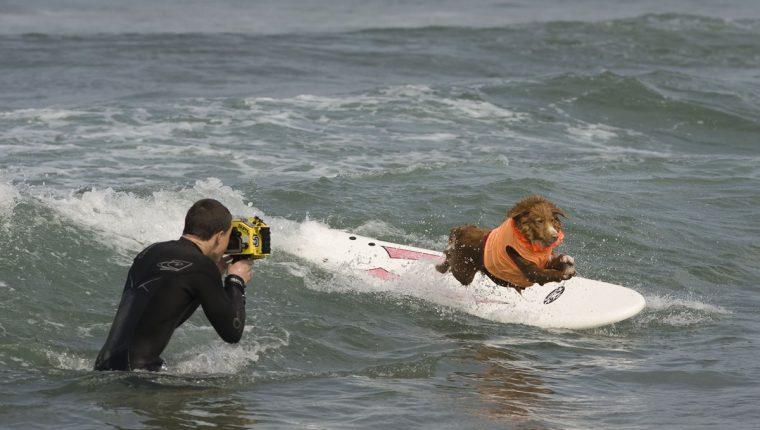 Perros surfistas causan sensación en playa estadounidense. (Foto Prensa Libre: EFE).