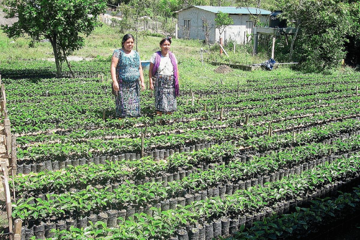 FAO resalta necesidad de plan de agricultura familiar