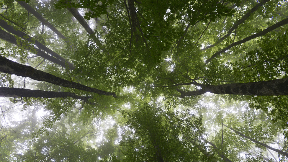 Por qué la Tierra tiene hoy más bosques que en 1982 (y por qué esto no es necesariamente una buena noticia)
