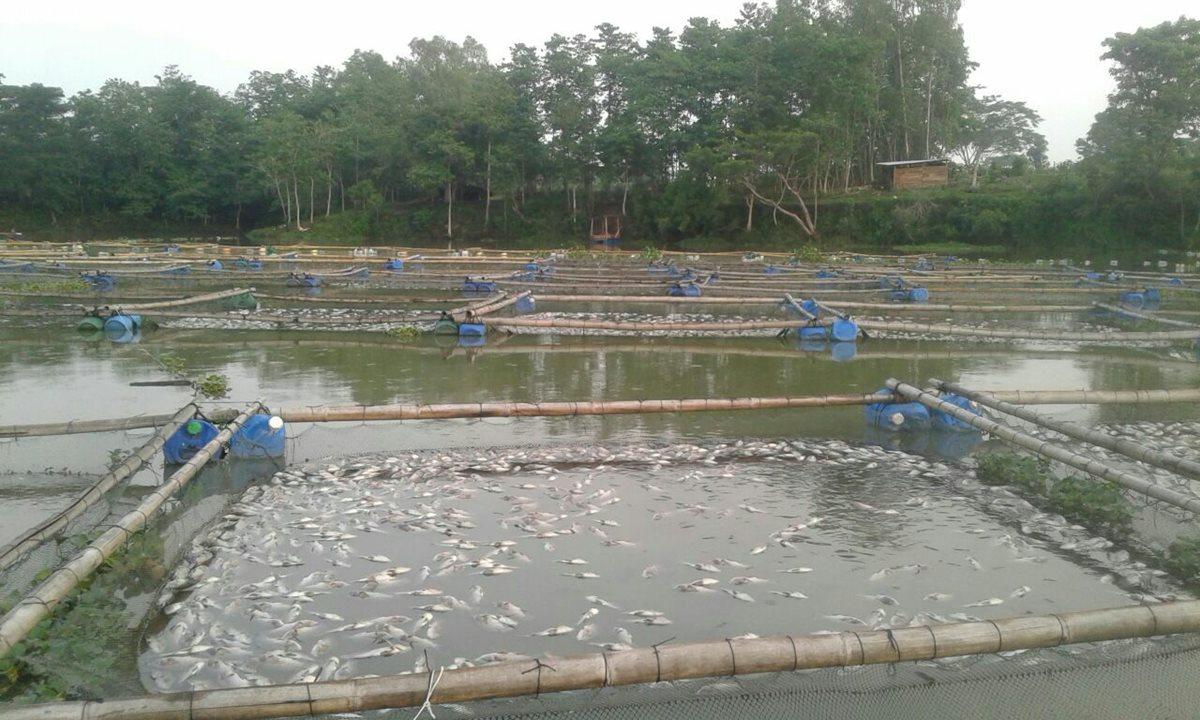 Emiten alerta para evitar consumo de peces que habrían muerto por posible contaminación de laguna