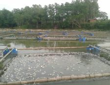 Pobladores de Mangales, Santa Cruz Muluá, Retalhuleu, rescataron algunas mojarras para comercializarlas. (Foto Prensa Libre: Rolando Miranda)