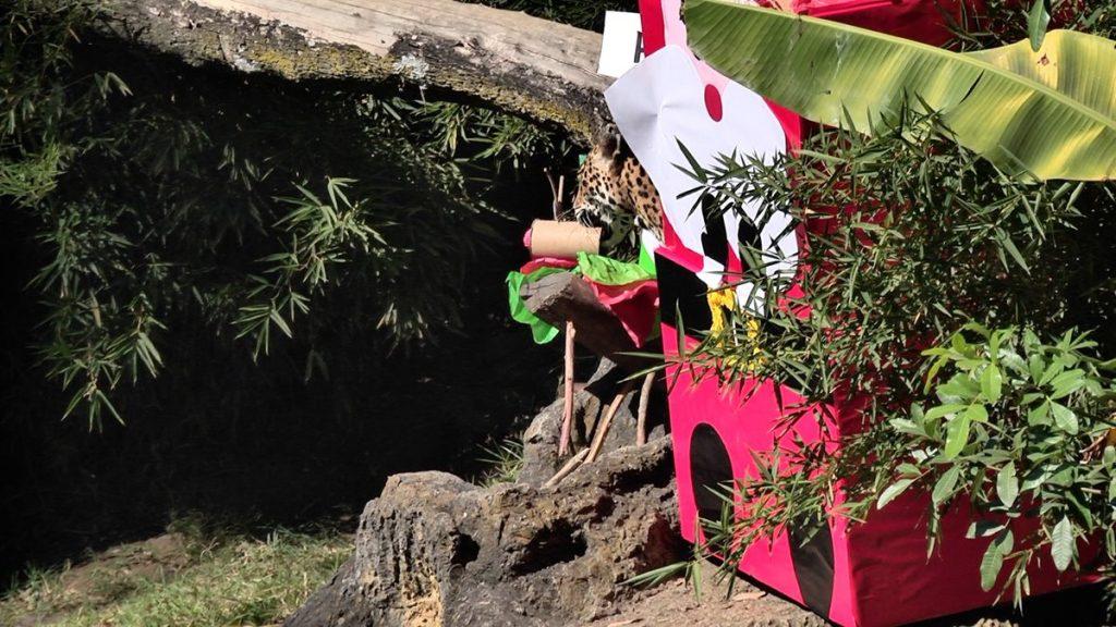 Lo regalos fueron colocados en coloridos envoltorios.