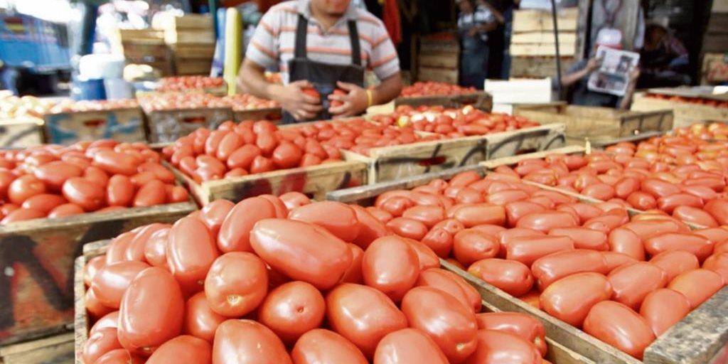 Precio de tomate afecta a productores y amenaza la cosecha por esta razón