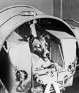 Imagen muestra a Laika a bordo de la cápsula Sputnik II en 1957. (Foto Prensa Libre: AFP)