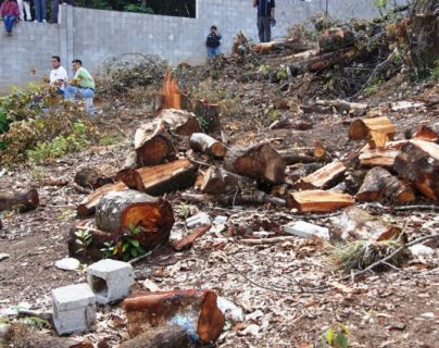 Protectores de la Cordillera Alux detectaron en las últimas semanas varias zonas taladas, sin autorización de las autoridades. (Foto Prensa Libre: Cortesía Conap)