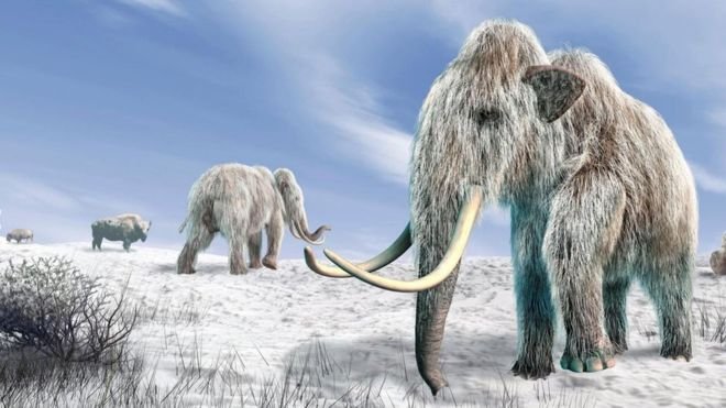 Es posible que dentro de unos años volvamos a traer al mamut lanudo en forma de un elefante híbrido. (SCIENCE PHOTO LIBRARY)