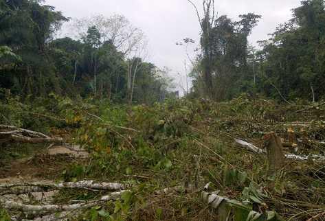 El 14 de marzo pobladores tomaron el parque y talaron más de tres mil árboles.