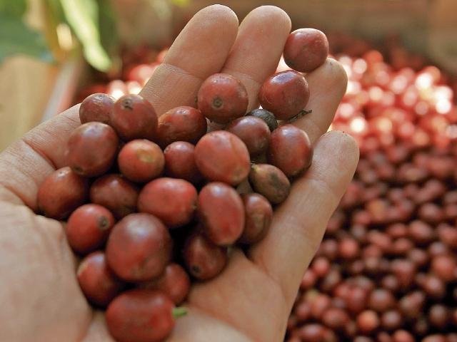 El Salvador busca que la población entienda que el café es arte y cultura