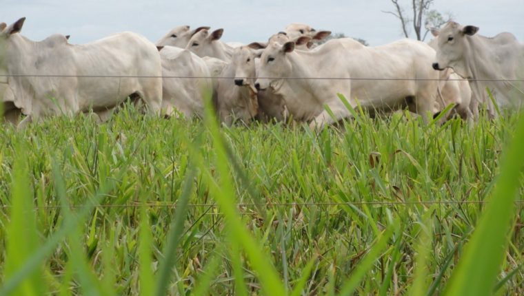 El programa PROSABO se encargará de la educación, capacitación y formación sanitaria bovina del país.
