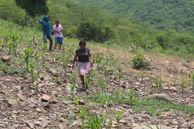 Este miércoles empezó la segunda fase de la canícula y que podría afectar zonas áridas del país, sobre todo el Corredor Seco. (Foto Prensa Libre: Hemeroteca PL)