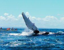 Seis meses, a partir de esta semana, es el plazo para que las empresas dedicadas al avistamiento de cetáceos se regularicen.