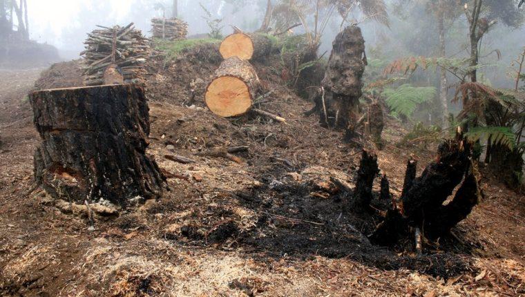 La deforestación es una de las principales causas de la pérdida de suelo agrícola. (Foto Hemeroteca PL)