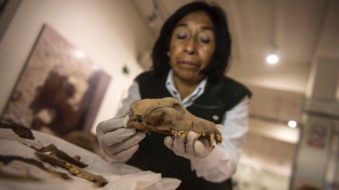 El misterio del cementerio milenario de humanos y perros enterrados bajo el zoológico más importante de Perú