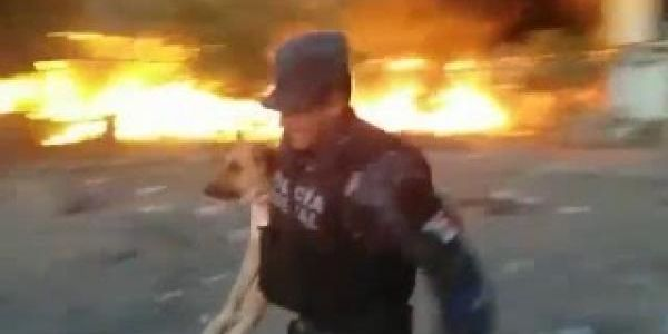 VIDEO: Policía federal rescata a un perro durante incendio