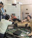 Radiografía a la dentadura de un león. Foto: cortesía Zoológico La Aurora