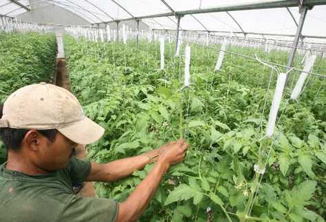 Tecnificación agrícola permite aumentar la producción de alimentos.