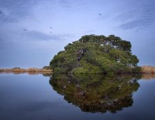 La Reserva Natural de Usos Múltiples Monterrico, está administrada por el Cecon (Centro de Estudios Conservacionistas) de la Universidad de San Carlos. (Foto Prensa Libre: Tono Valdés)