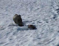 Fotografía distribuida en México donde se observa el alpinista atrapado hace 50 años en una avalancha. (Foto Prensa Libre: Internet)