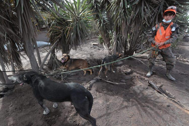Varios animales han sido rescatados del lugar.